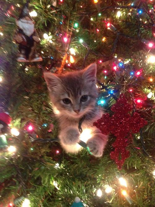 I love Christmas! Kitty