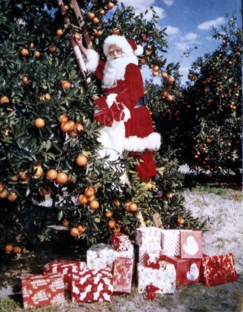 Santa Claus picking oranges – 1965. Florida Memory on The Commons (Flickr);  State Library and Archives of Florida; http://www.flickr.com/photos/floridamemory/8280151165/
