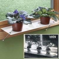 Indoor Window Shelf Plant
