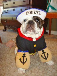 Popeye #DIY #dog #Halloween costume! | Dog DIY Projects ...