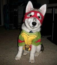 TMNT Dog Costume