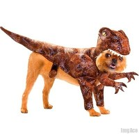 Dog Dinosaur Costumes | Just ... Yes. | Pinterest