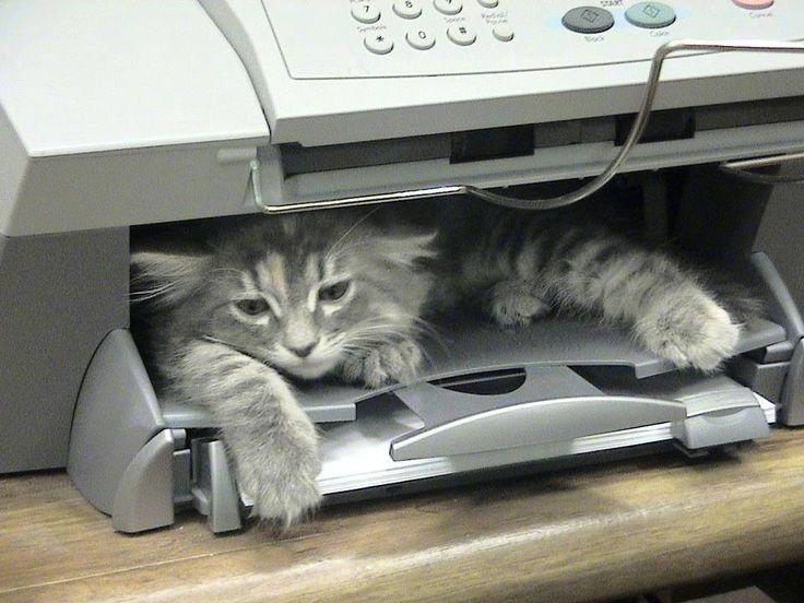 Copy cat dog and cat pinterest