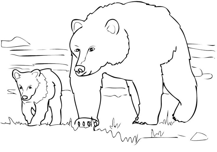 Pin Grizzly Bears Coloring Pages Sheets Super on Pinterest