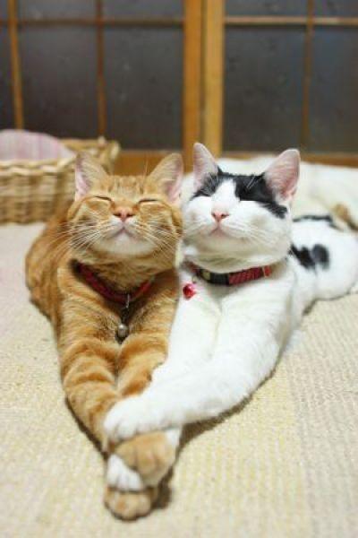 we love catnip.... #lolcats #lol #lulz #lmao #funny #humor #cats #kittens #animals #kitten #meme #memebase #grumpy cat #cat shaming #lolcat #cute #aw #weheartit #kitty #love #beauty #sweet #zoo #nature #natural #meow #kitty #hellokitty