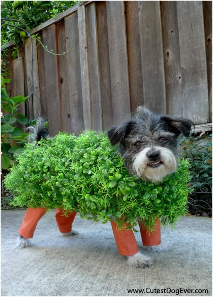 How to Make a Chia Pet Halloween Costume for Your Dog