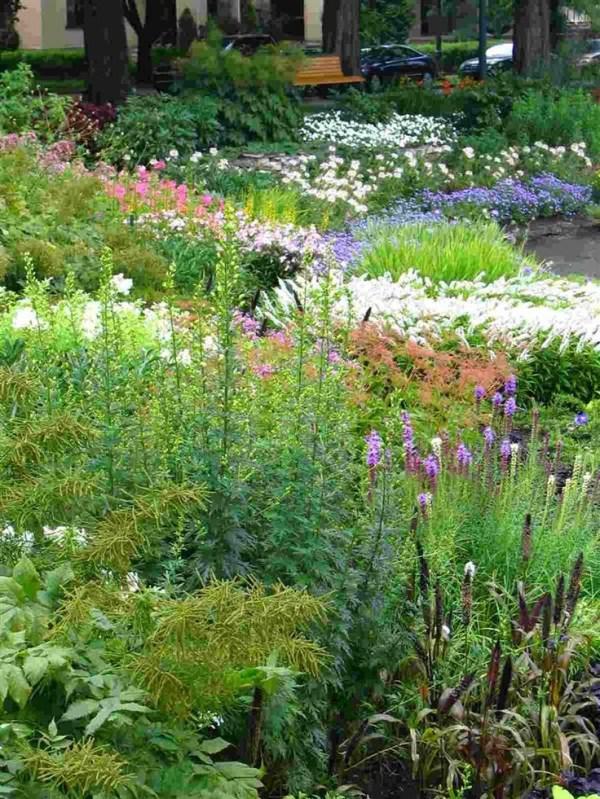 Bing perennial garden ideas Perennial Shade