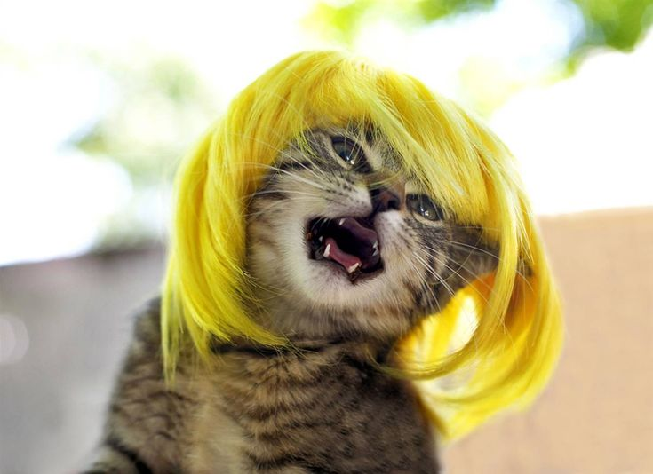 pets  | Cool Cats Haircuts | Pets - Exotic, Animals, Stories