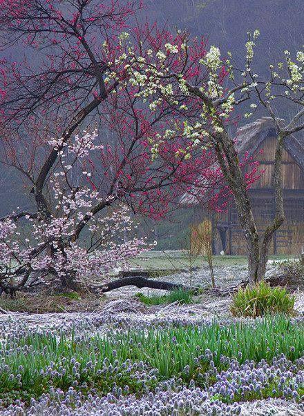 Beautiful ....Shirakawa-go, Japan