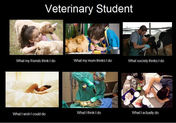 Veterinary Medicine fun subjects in college