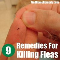 home remedies for fleas on puppies - 28 images - 28 home ...