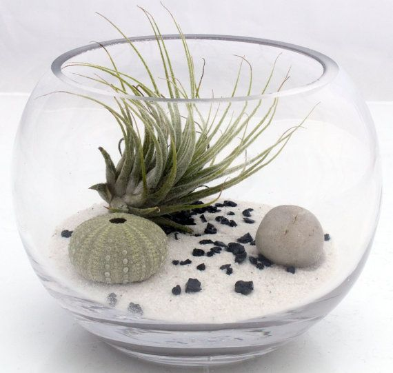 Air plant zen garden terrarium kit with Tillandsia by XercesArt, £25.00 youtube mp3