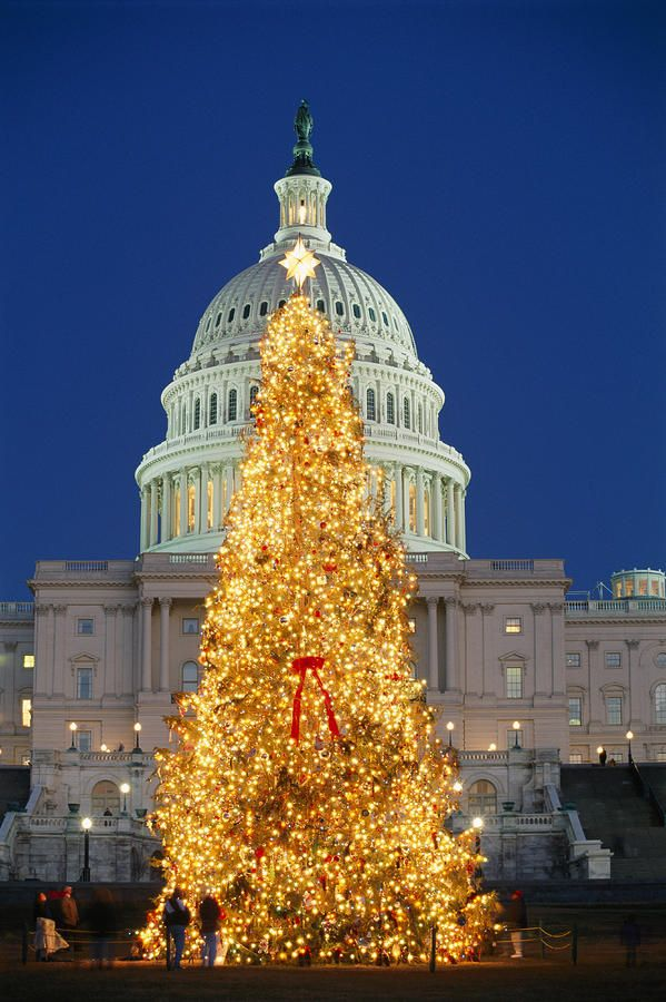 Christmas Tree standing before the Capitol