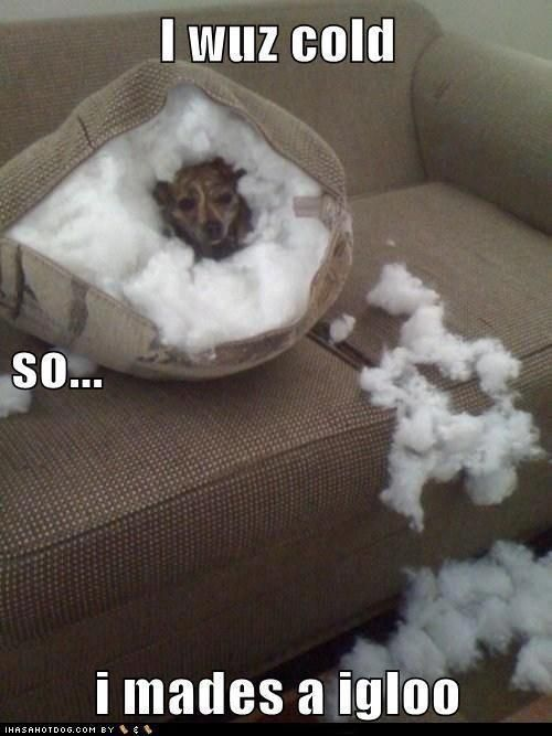 Every dog owner has came home to this and thought what was he thinking lol now we know