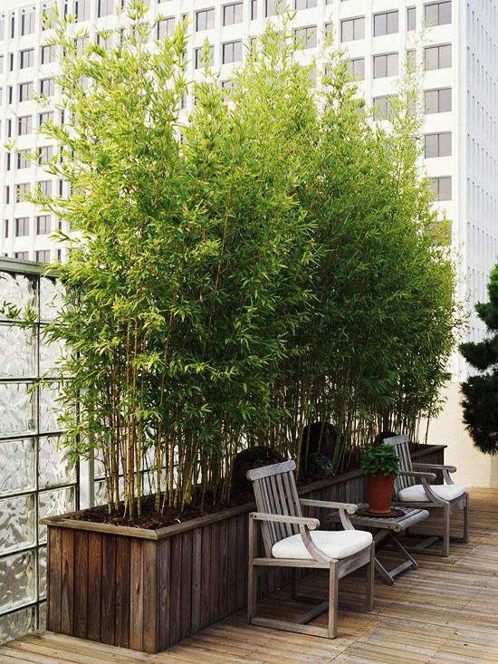 Decorare il giardino con le piante di bamb guida giardino - Siepe in vaso terrazzo ...