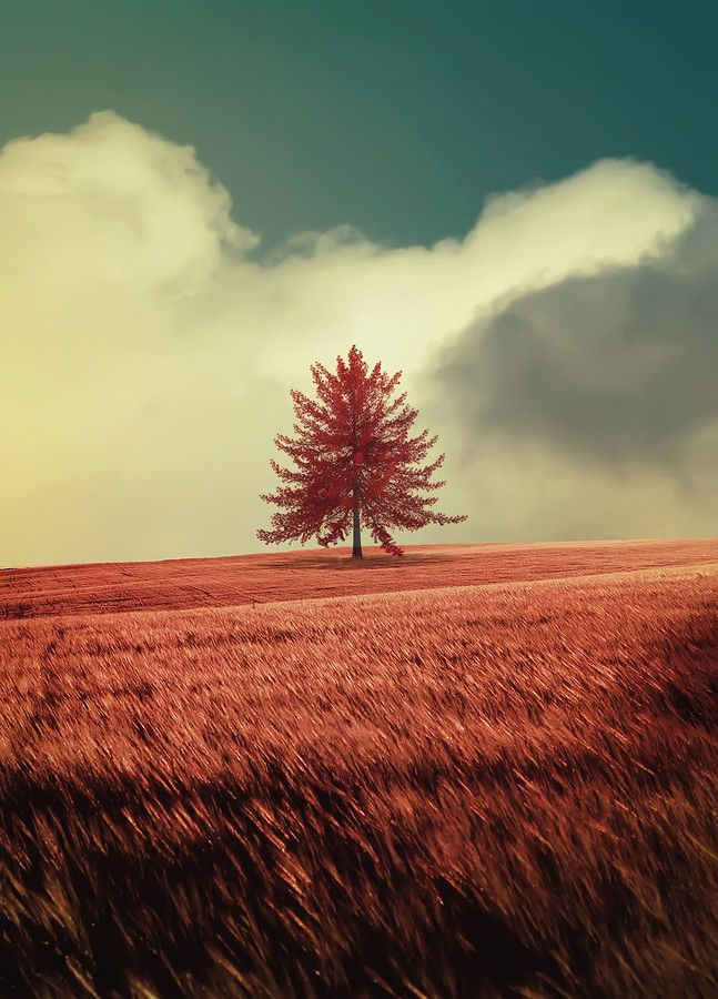 TREE by Enigma  on 500px