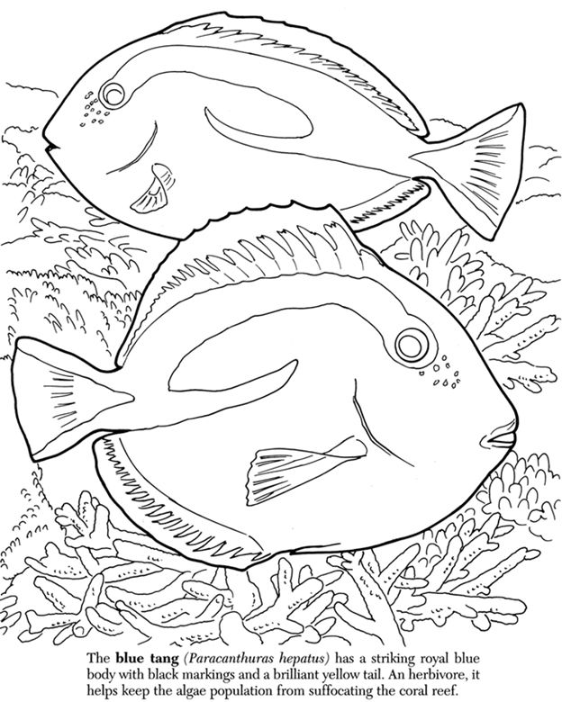 Free greatbarrierreef coloring pages