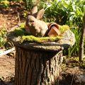 Popular outdoor tree stump ideas bedroomideass com