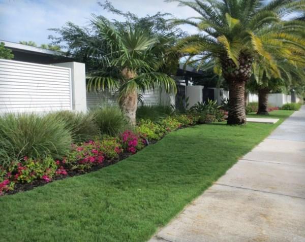 tropical front yard. #garden