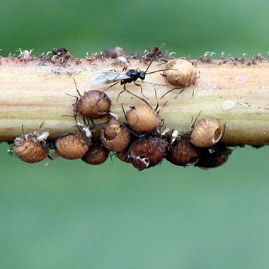 i parassiti e le malattie fungine, che spesso e soprattutto in primavera e in estate proliferano, rischiando di danneggiare piante, fiori e manto erboso