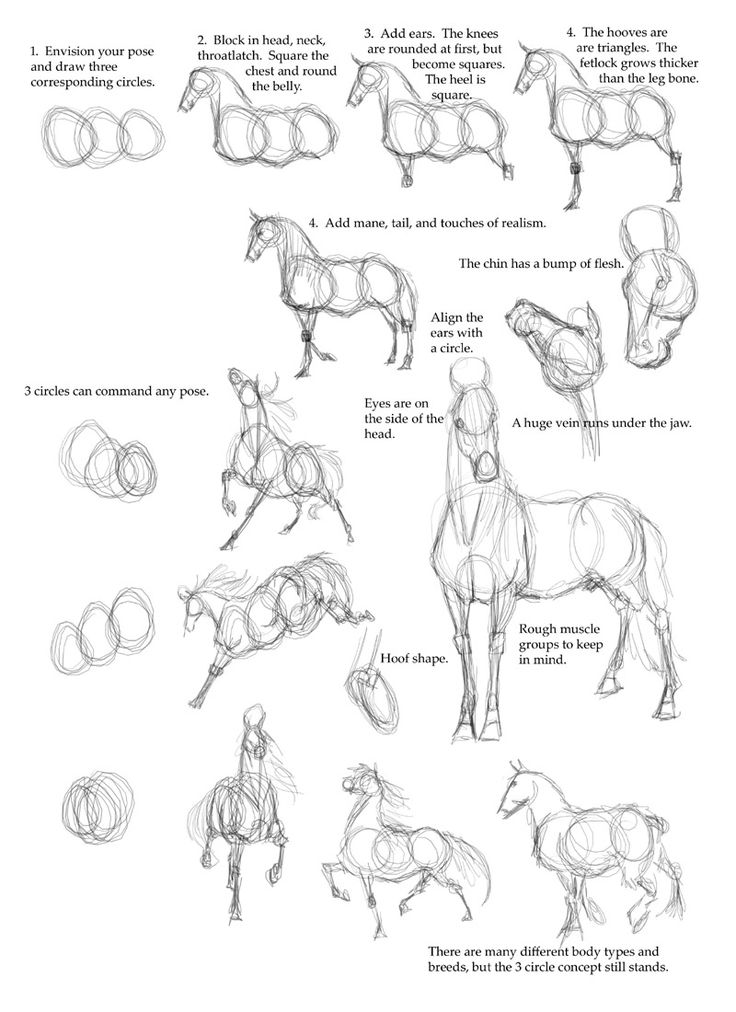 'horse drawing reference' in Drawing References and Resources