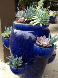 Potted succulent arrangement garden | green things | Pinterest