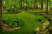country backyard look. Amazing. | landscape | Pinterest