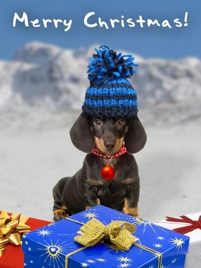 merry christmas dachsund holiday