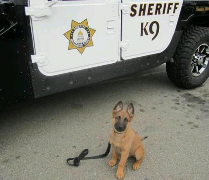 Police Dog In Training! ! K9 Pinterest