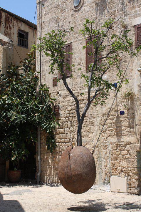 Tree hanging in Jaffa, Israel
