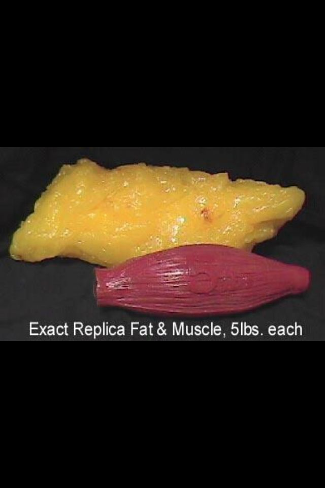 This is fat and this is muscle. So when I work out next time, I need to have a good picture of actually burning fat and building muscle and muscle burns fat faster.