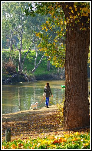 Melbourne Studley Park  beautiful walk