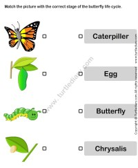 Butterfly Life Cycle Worksheet1 | Life Cycle Worksheets ...