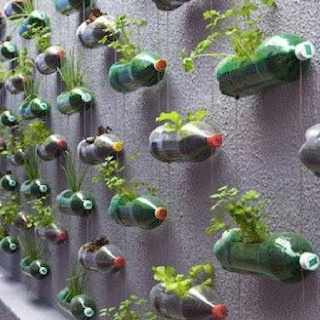 Vertical garden using recycled plastic soda bottles.