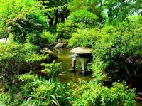 Traditional Japanese Gardens