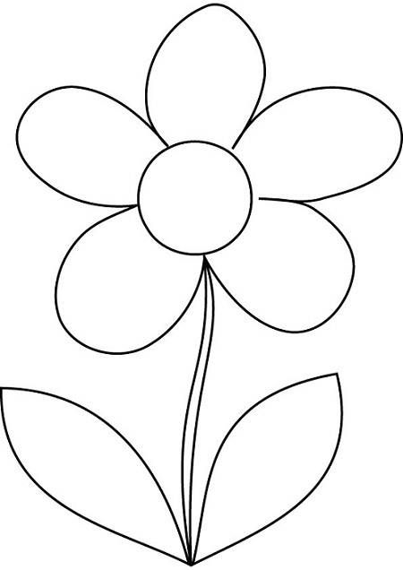 Parts Of A Daisy Flower Diagram, Parts, Free Engine Image