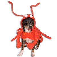 Lobster Paws Dog Costumes #halloween