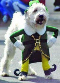 Buddy the Elf dog costume lmao | Animals