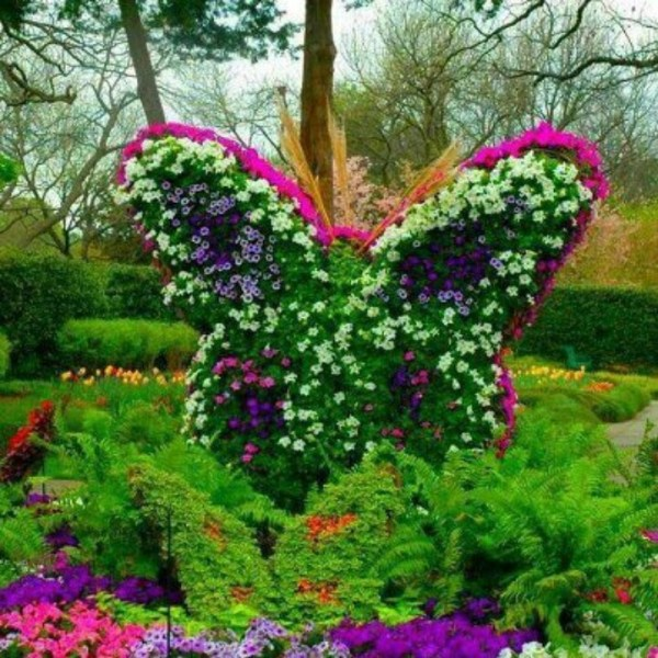 "butterfly"" flower garden ideas"