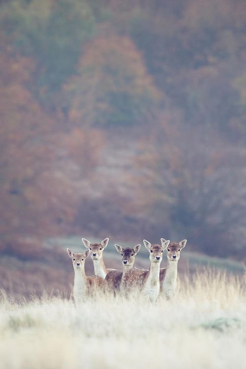 Frosty ~ By Mark Bridger