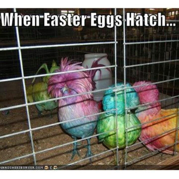 Easter Humor ;)
