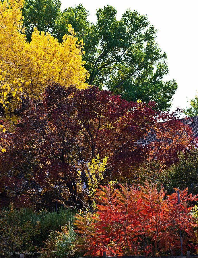 ✮ Autumn Pallet