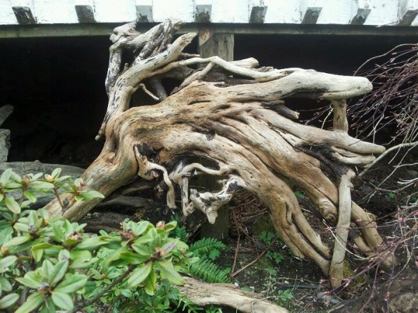 driftwood in landscaping
