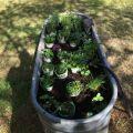 Herb trough backyard amp landscaping pinterest