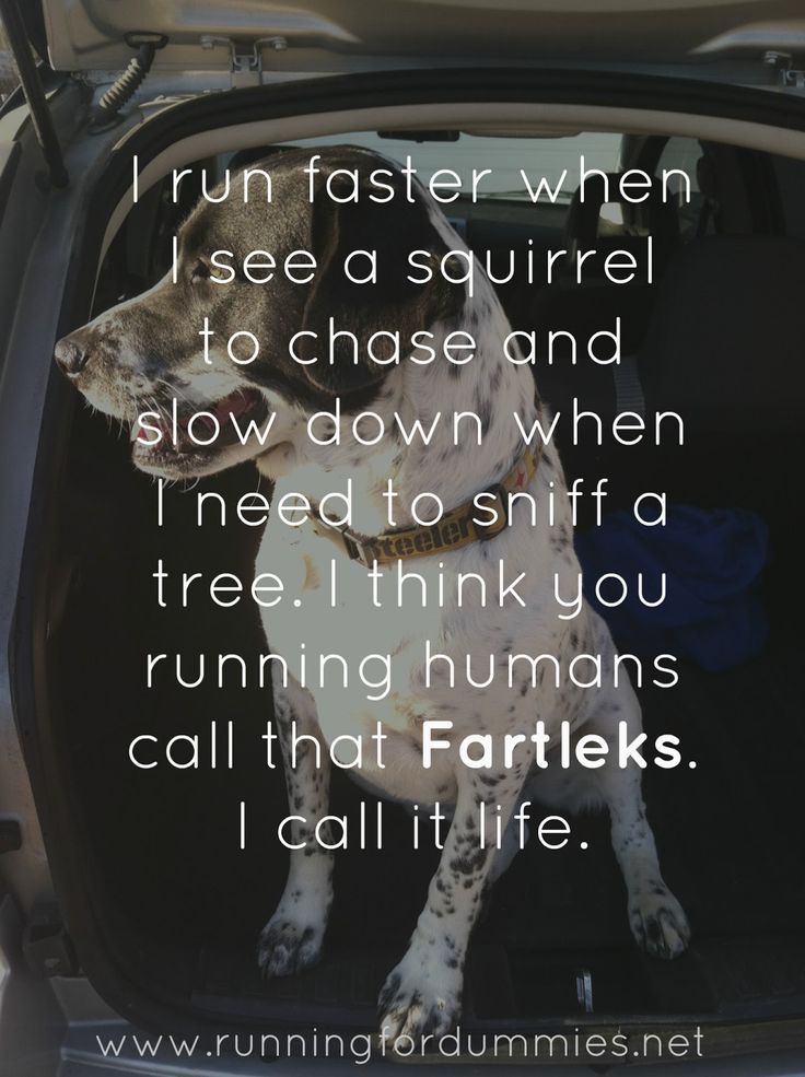RUNNING WITH OLLIE: According to Ollie: Running Lessons From My Dog - fartleks - I run faster when I see a squirrel and slow down when I need to sniff a tree. I think you running humans call that FARTLEKS.  I call it life