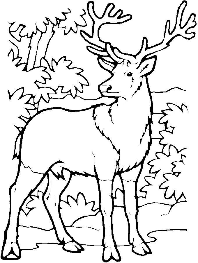 Free Printable Deer Coloring Pages For Kids Sketch