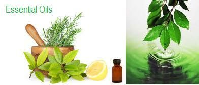 Essential oils can be ingested, injected, topically applied, inhaled and by intravenous method.