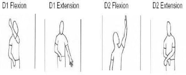 PNF D1 flexion, D1 extension, D2 flexion, D2 extension