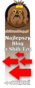 najlepszy blog o shih tzu