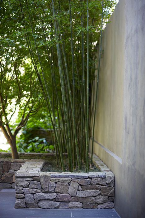 bamboo landscape grow